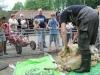 Kinderboerderij Emmelerbos - schapen scheren - mei 2014